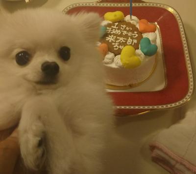 米太郎 ケーキ