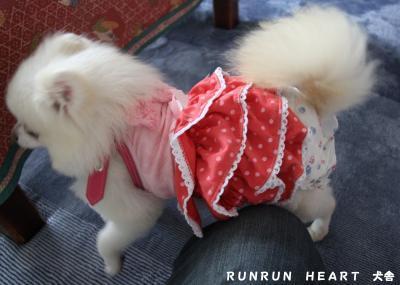 心幸姫 お洋服