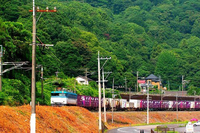 貨物列車EF81 501