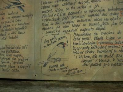プラハ動物園文鳥