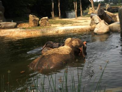 プラハ動物園象