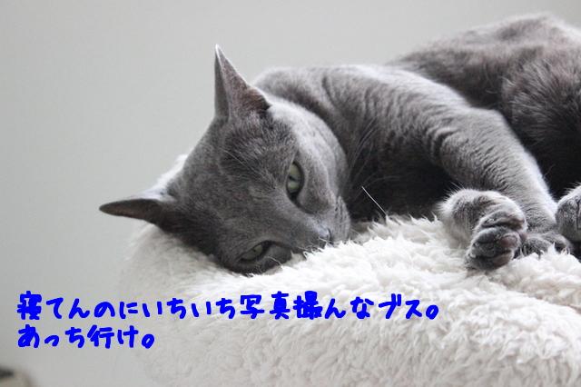 T5Bj09vfgLGtsCS1506512027_1506512089.jpg
