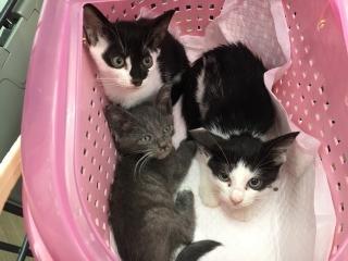 IMG_5269 先発保護子猫