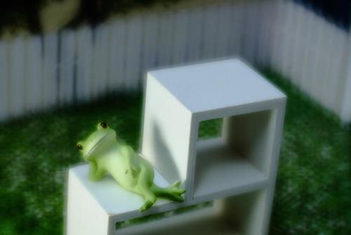 ツバキアキラが撮った、カエルのコポーシリーズ・Mr.Frog。ひとやすみ、ひとやすみ。