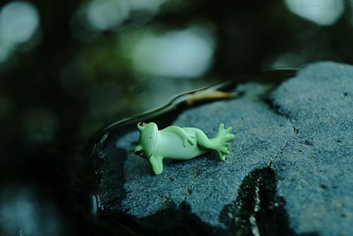 ツバキアキラが撮った、カエルのコポーシリーズ・Mr.Frog。池のほとりでひとやすみ。