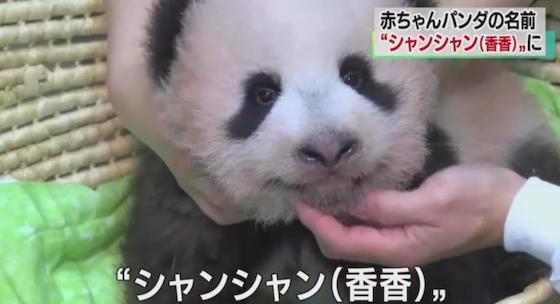 パンダ シャンシャン 香香 上野動物園 名前 ピンクピン太郎
