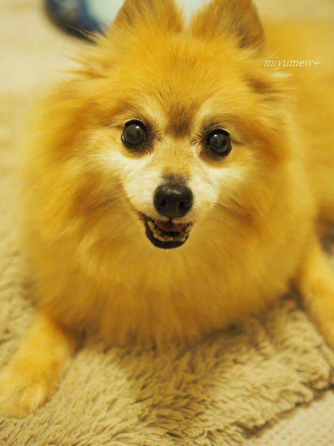 モデル犬?(笑)170804