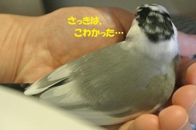 DSC_7875済