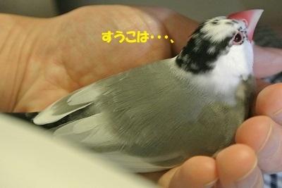 DSC_7876済