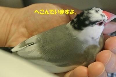 DSC_7878済