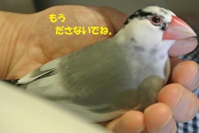 DSC_7879済