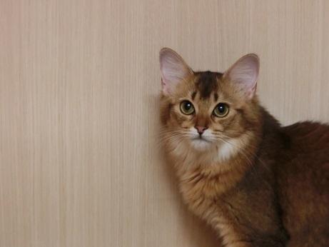 リリー (2)