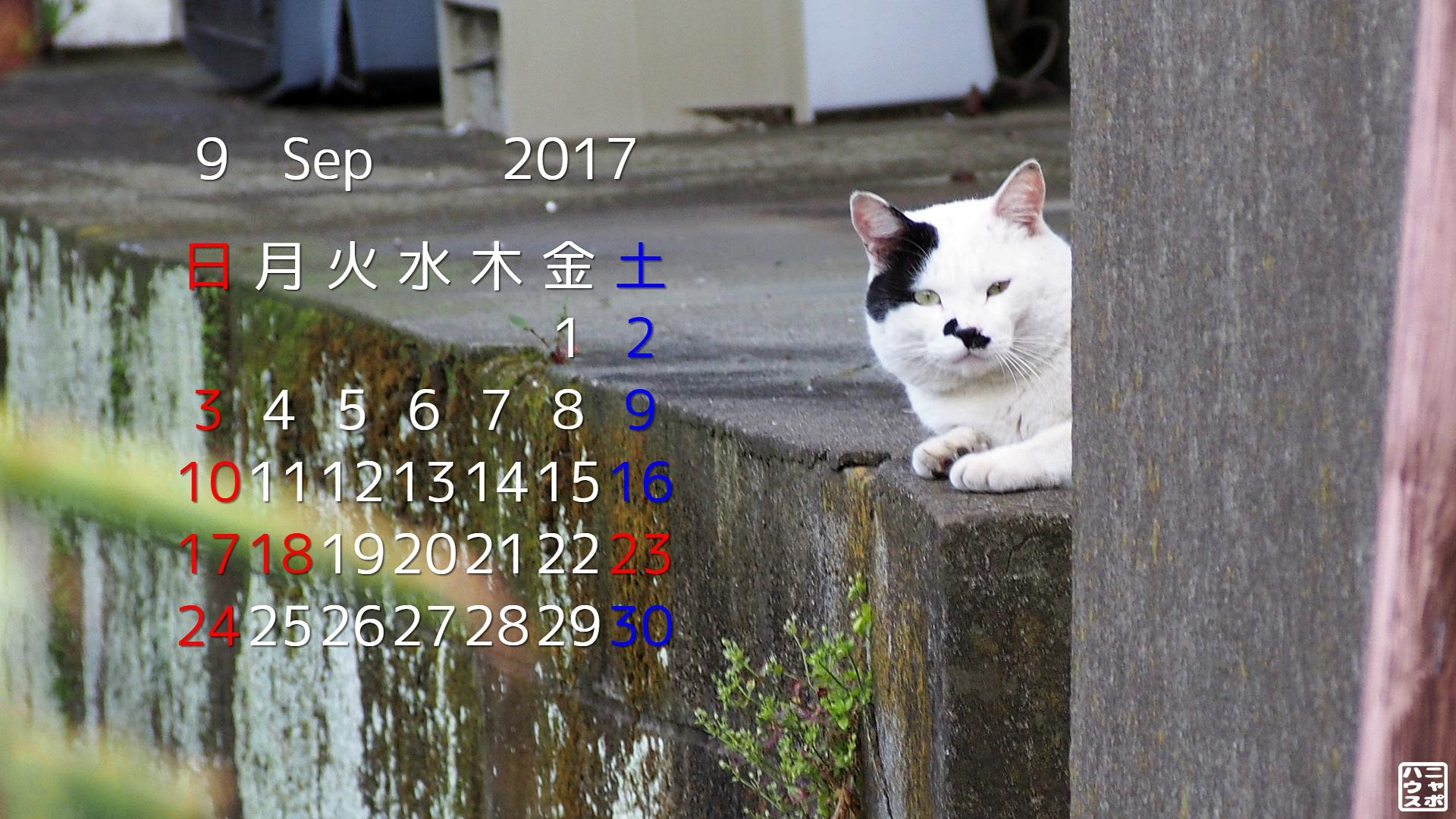 2017年9月 猫デスクトップカレンダー