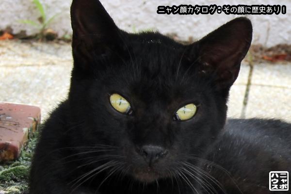 ニャン顔NO94 クロ猫さん