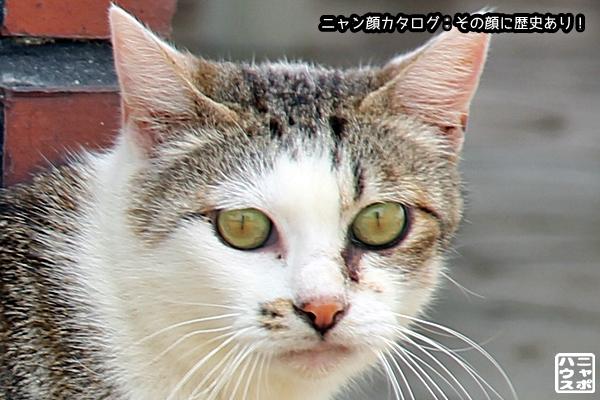 ニャン顔NO103 サバトラ猫さん