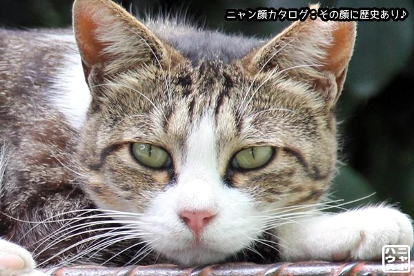 ニャン顔NO86 サバトラ猫さん