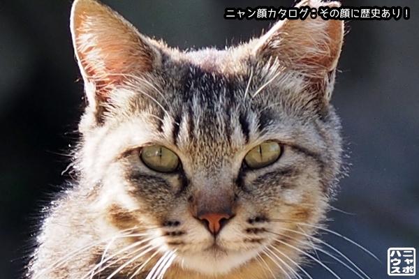 ニャン顔NO87 キジトラ猫さん