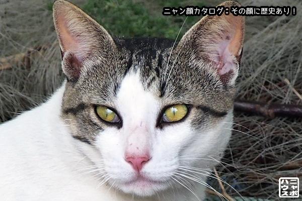 ニャン顔NO95 サバトラ猫さん