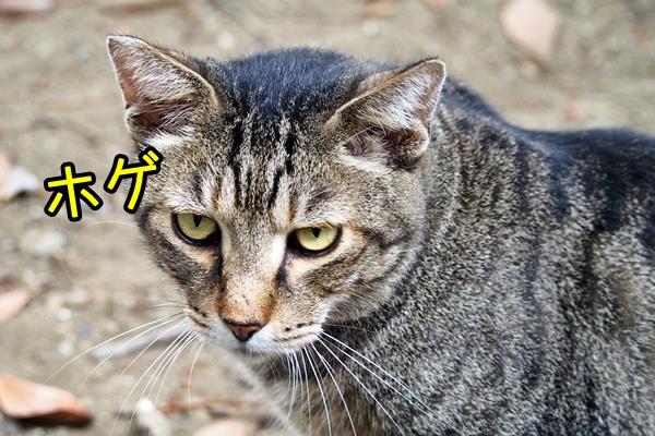 猫 ホゲ顔