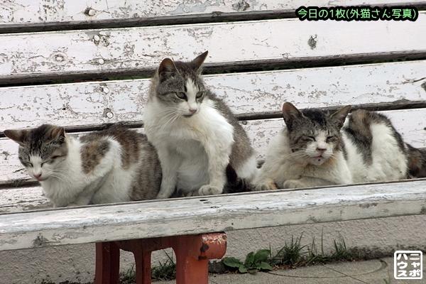 ニャンコ三兄弟