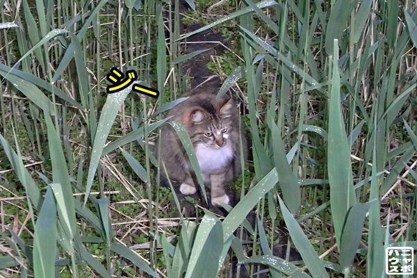 猫 草むら