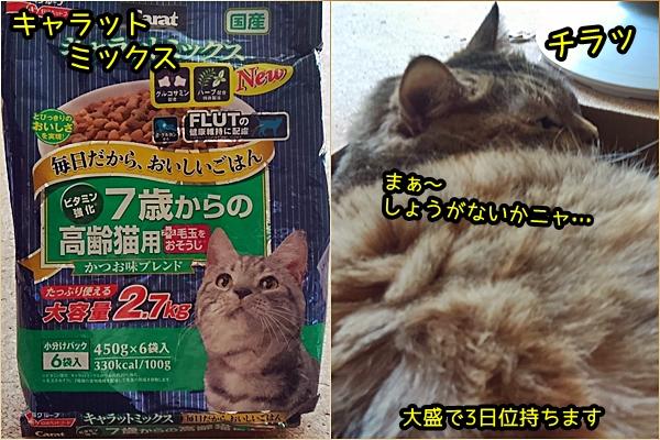 猫 カリカリ