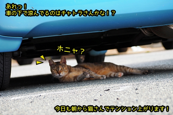 ニャポ旅41 後編