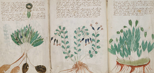 Voynich-Manuscript2.png