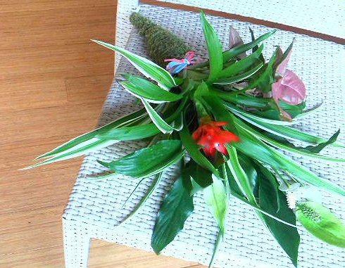 Leaf-natsu1.jpg