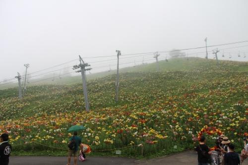 ダイナランド ゆり園