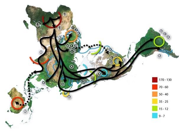 ミトコンドリアDNAハプログループ拡散モデル