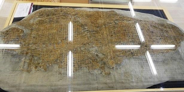 木製編みかご(約8000年前のもの)