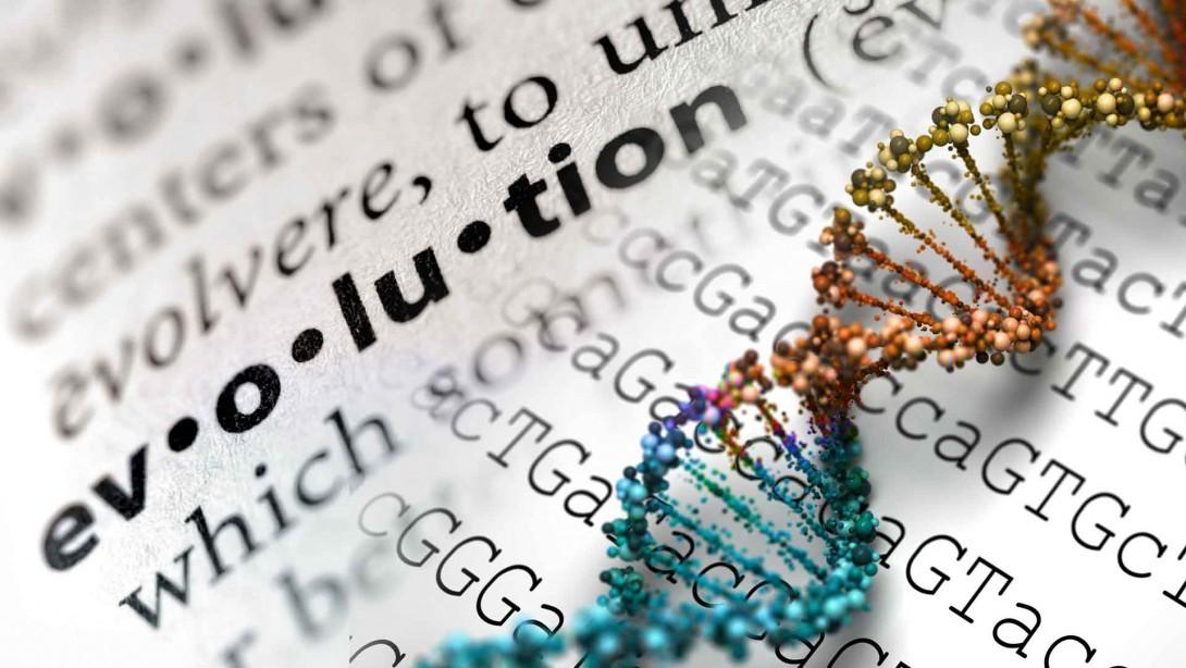 「人間はチンパンジーから進化した」は、間違いです ~ 「進化」と「進歩」の違い