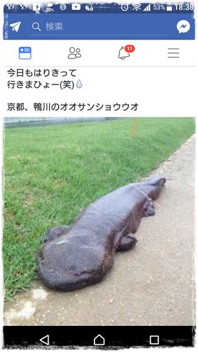 雑記Screenshot_20170917-183848