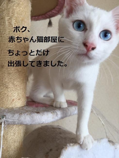 IMG_7246 - コピー