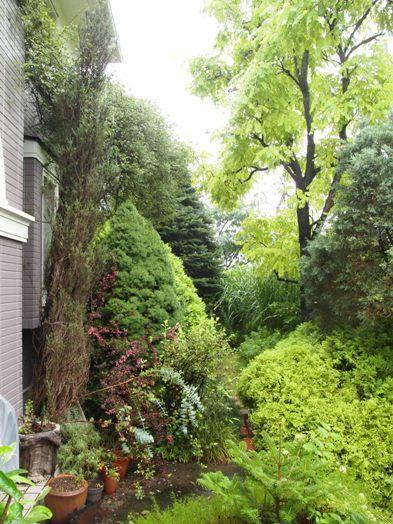my-garden 007