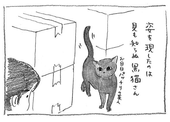 10-黒猫