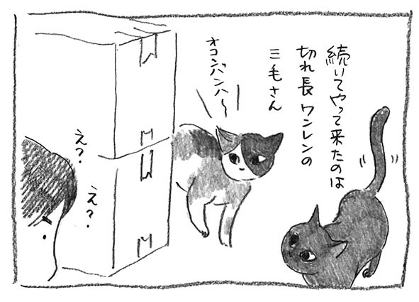 11-ワンレン三毛