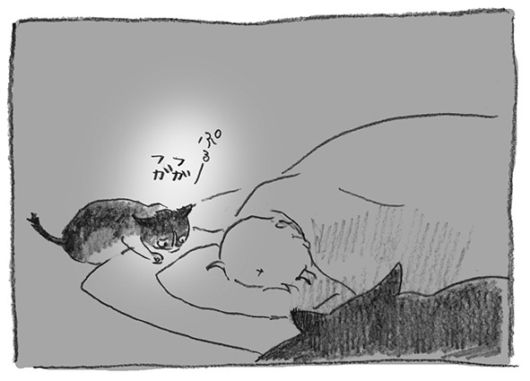 13-ぷるー