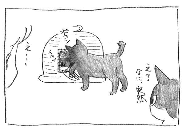 6-白ポコッ