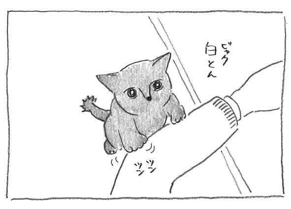 3-白とん