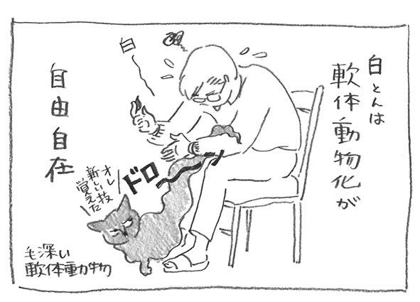 4-軟体動物