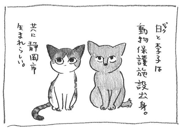 1-静岡生まれ