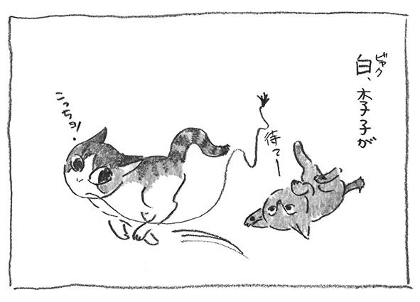 1-白李子チビ