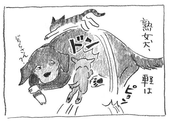 3-熟女犬軽