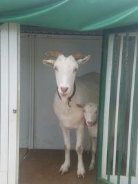 【写真】アランの小屋で雨宿りするアランとポール