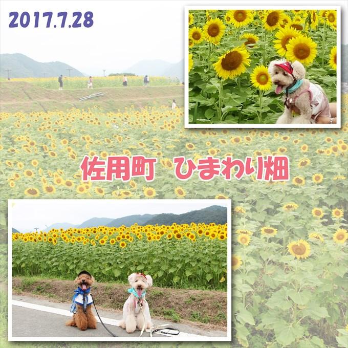 43_20170924170408fd5.jpg