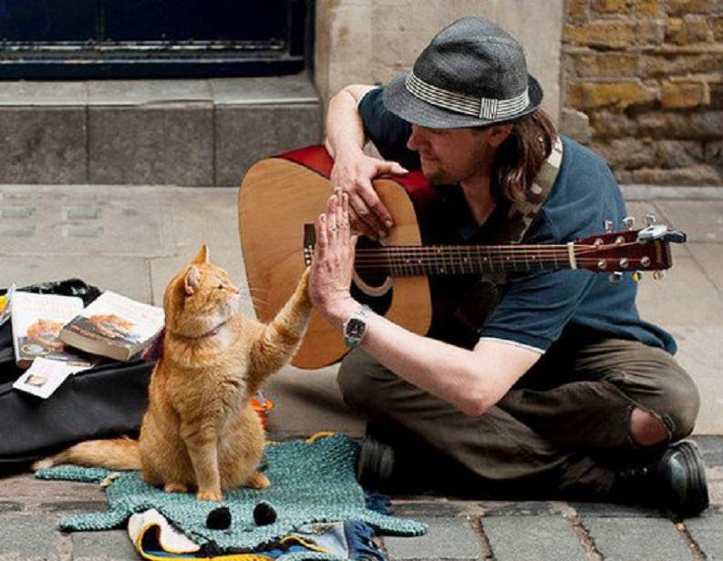 「猫の恩返し」で人生を救われた ジェームズ・ボーエンさん4