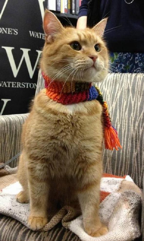 「猫の恩返し」で人生を救われた ジェームズ・ボーエンさん5