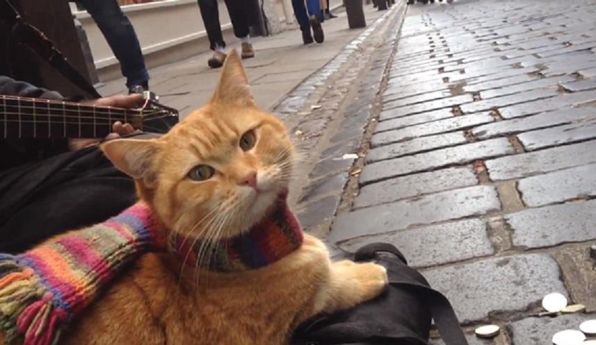 「猫の恩返し」で人生を救われた ジェームズ・ボーエンさん6